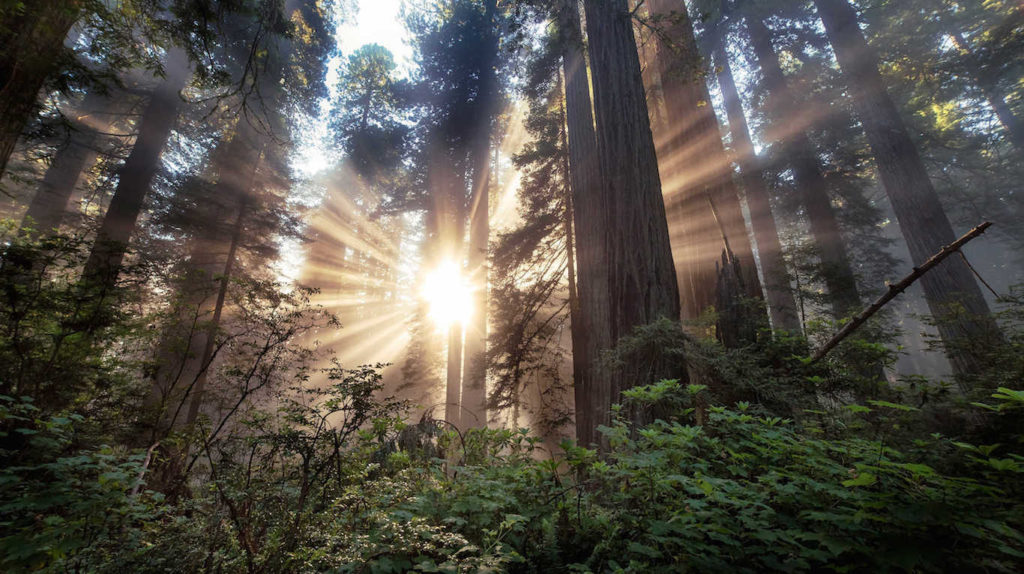 Mysterious disappearances in Humboldt County, California 27