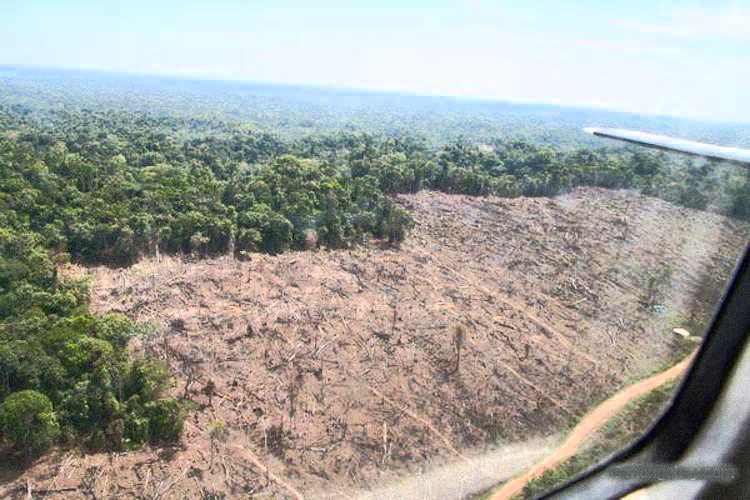 The world lost an area of tropical forest the size of Bangladesh in 2017 21