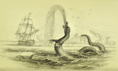 This Famous Sea Serpent Story Might Actually Have Been a Sighting of a Whale Penis 96