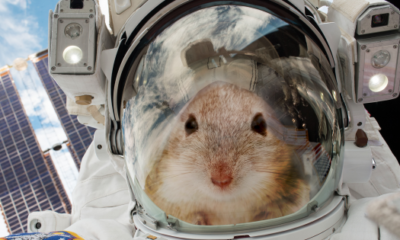 20 Mice Are Going to Space To Help Us Figure out How to Survive on Mars 87