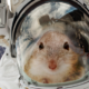 20 Mice Are Going to Space To Help Us Figure out How to Survive on Mars 88