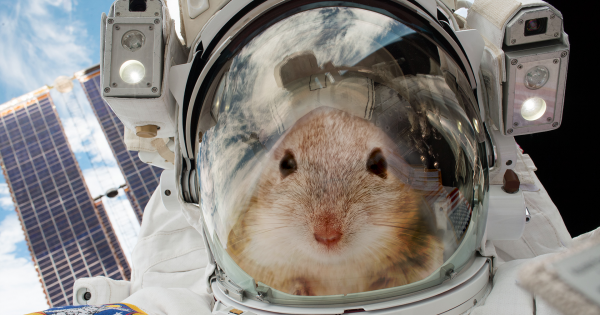 20 Mice Are Going to Space To Help Us Figure out How to Survive on Mars 86