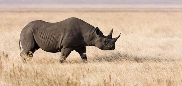 Eight black rhinos die after move to new park 1