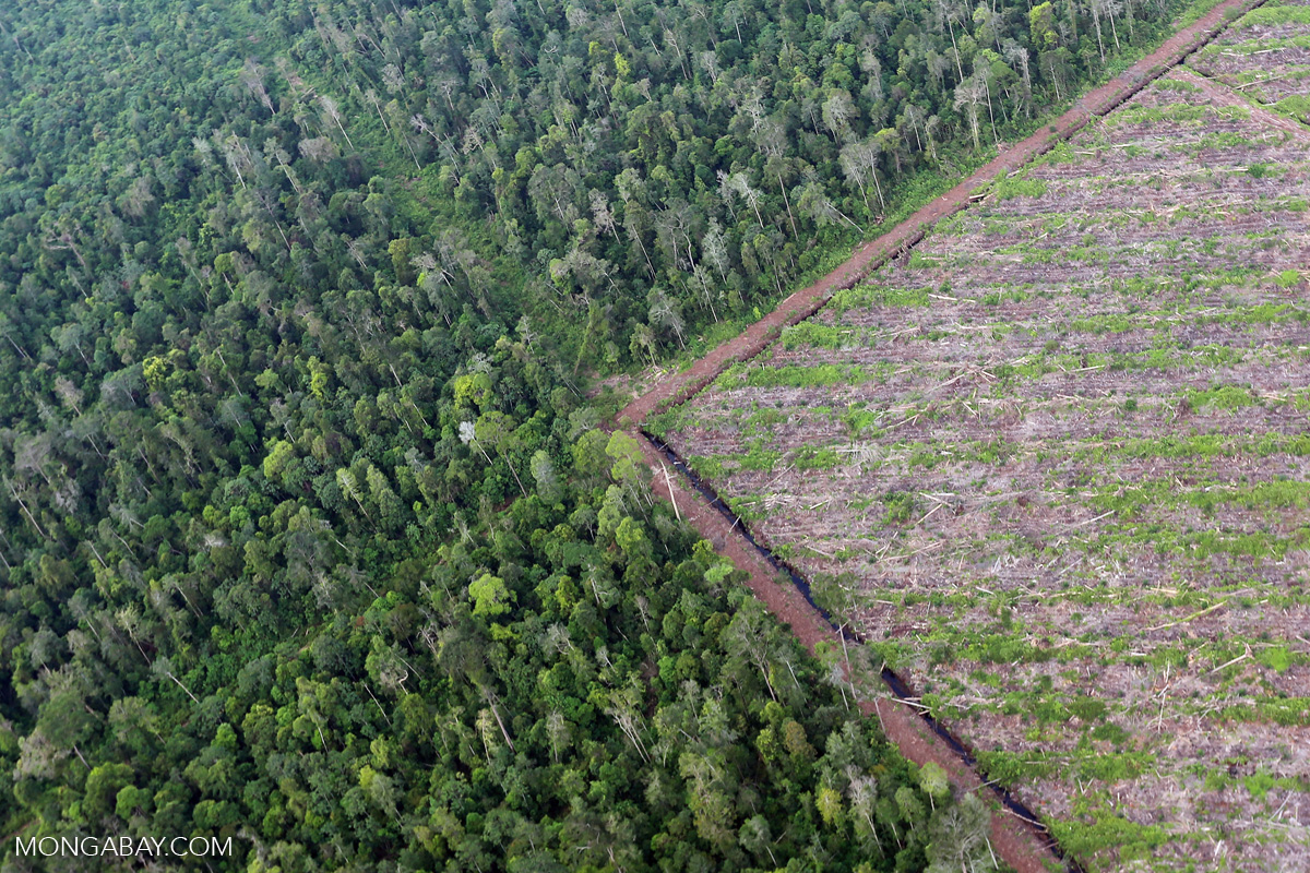 The world lost an area of tropical forest the size of Bangladesh in 2017 34