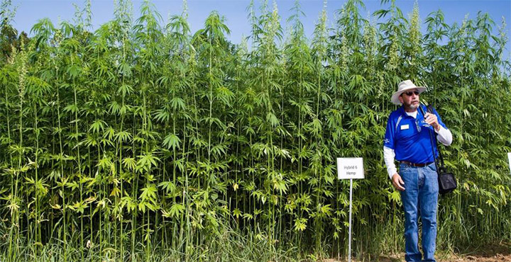 Hemp Could Change The World But It's Suppressed By Powerful Corporations 88