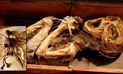 Bodies Of Mythical Creatures Unearthed In A Mysterious British Mansion 110