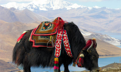 The Argument On Vegetarianism In Tibet 93