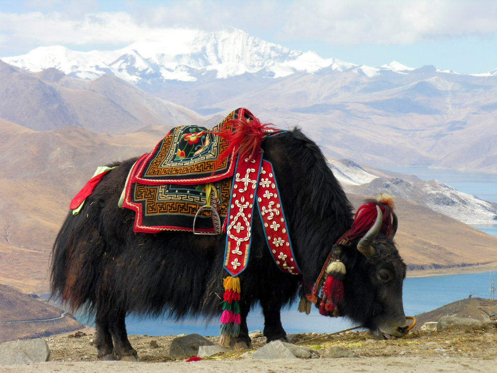 The Argument On Vegetarianism In Tibet 1