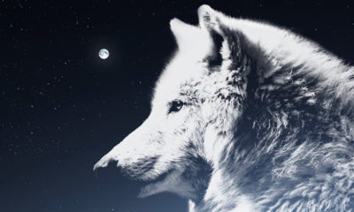 Descended From The Wolf? Myths And Traditional Beliefs 91