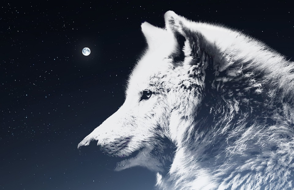 Descended From The Wolf? Myths And Traditional Beliefs 14