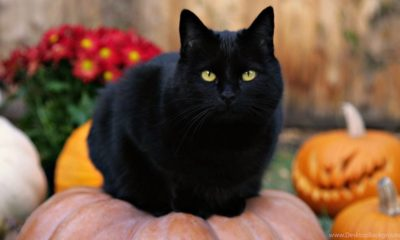 It's Almost Halloween! Here's What Black Cats Actually Symbolize 93