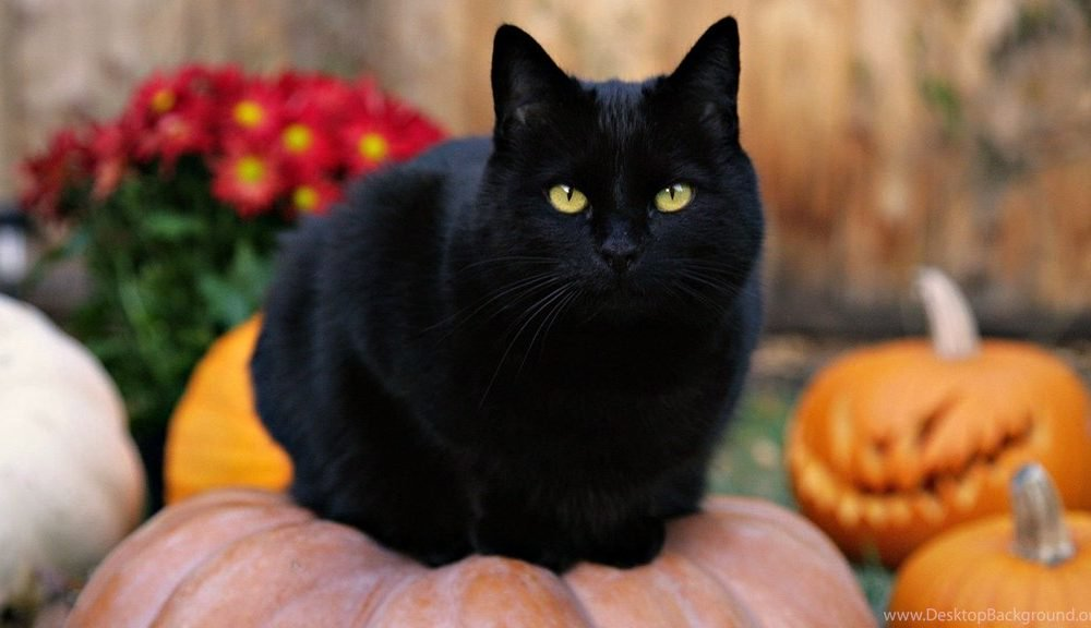 It's Almost Halloween! Here's What Black Cats Actually Symbolize 5