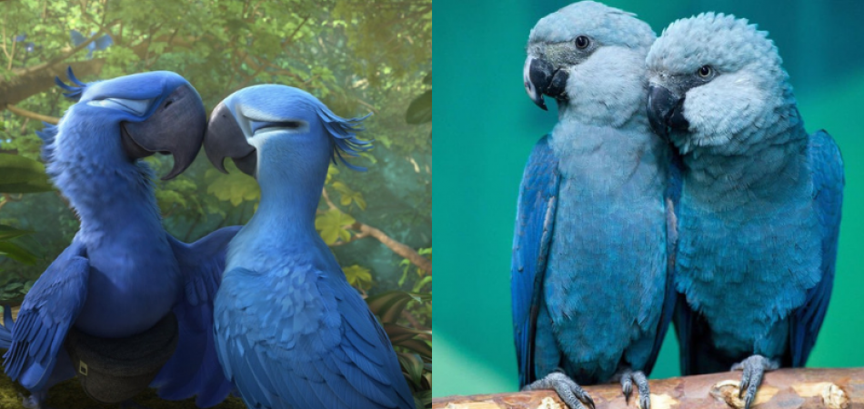 Blue Macaw Parrot Known From The Movie 'Rio' Is Now Officially Extinct 3
