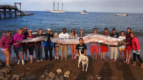 17 Foot Long Oarfish