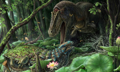 Rare T. Rex Relative Discovered in New Mexico 88
