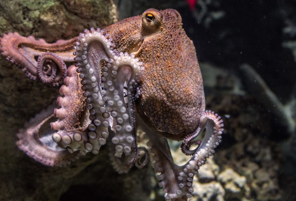 33 Scientists Say Octopuses Are Aliens From Space That Arrived To Earth On Icy Bodies 86