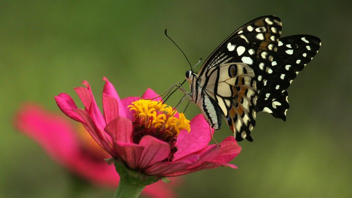 Declining Insect Population Could Lead to 'Collapse of Nature' 86