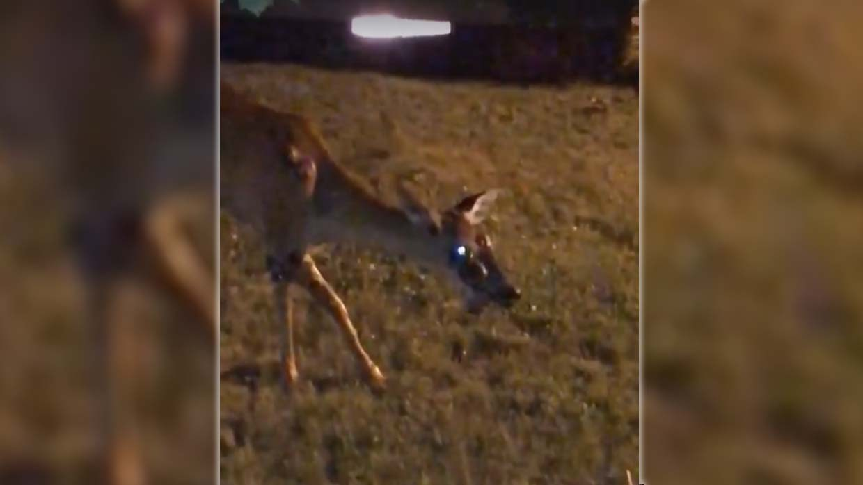 They record a zombie deer in the garden of a house in the United States, will the infection started to humans? 8