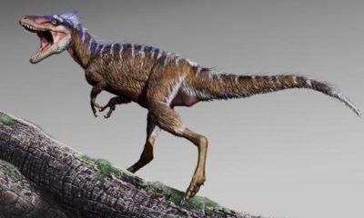 Miniature Tyrannosaurus rex discovered 90
