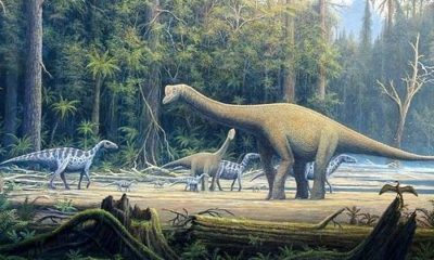 Dinosaurs were thriving before asteroid strike 86