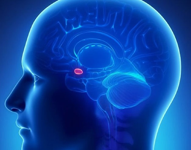 The pineal gland is a well-guarded secret today 91