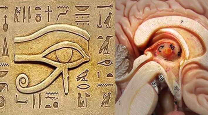 The pineal gland is a well-guarded secret today 90