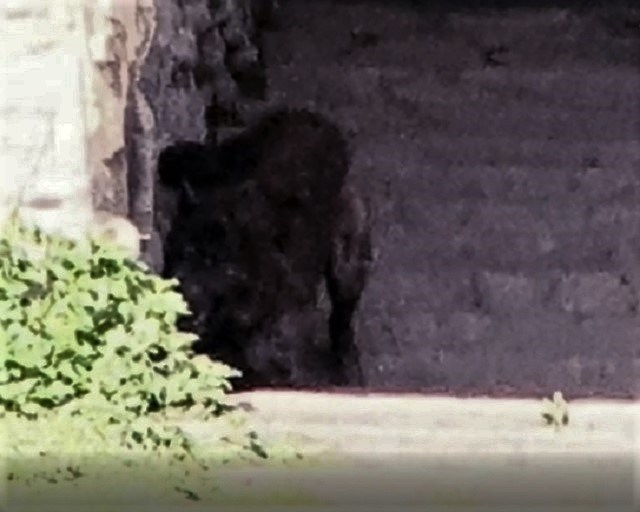 Woman Snaps Photograph Of Hellhound In The Shadows 5