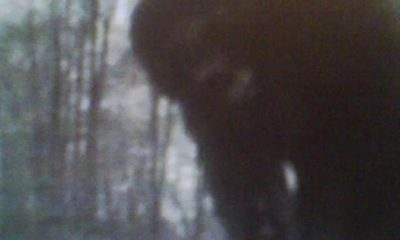 Bigfoot caught on camera trap in northwestern Pennsylvania 127