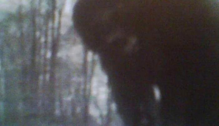 Bigfoot caught on camera trap in northwestern Pennsylvania 23