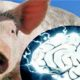 Scientists revived the brains of pigs who died a few hours ago 90