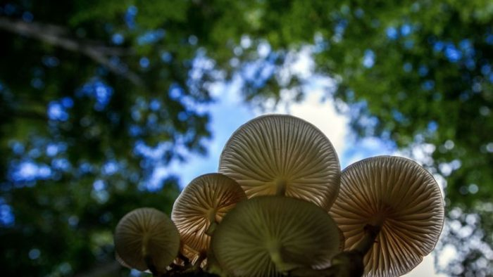 Scientists Discover an Edible Mushroom that Eats Plastic, Could Potentially 'Clean' Landfills 86