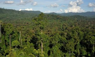 World's tallest tropical tree discovered 104