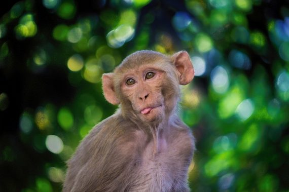 Scientists Put Human Brain Genes in Monkeys and Made Them Smarter 10
