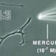 Video Shows What Mercury Does to a Brain Neuron in Just 20 Minutes 90
