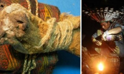 Scientists Discover 1,000-Year-Old Shamanic Pouch Containing Cocaine and Ayahuasca 87