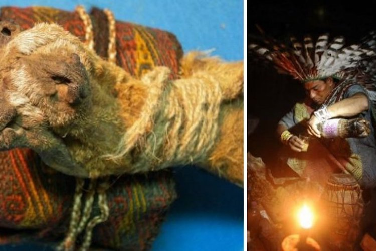 Scientists Discover 1,000-Year-Old Shamanic Pouch Containing Cocaine and Ayahuasca 3
