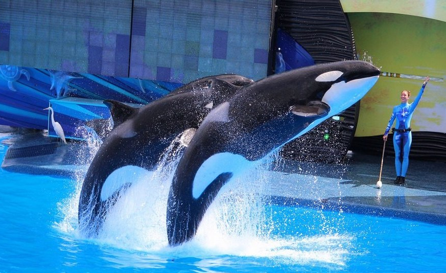 Canada Bans Whale, Dolphin And Porpoise Captivity 2