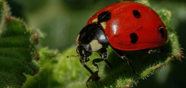 80-mile-wide 'storm' is swarm of ladybugs 86