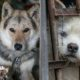 One Of The Largest Dog Meat Markets In South Korea Has Shut Down 94