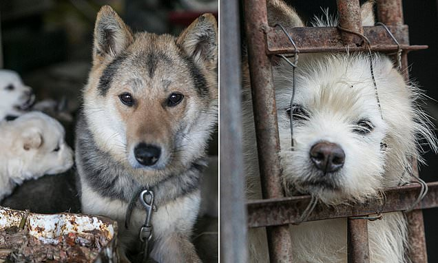 One Of The Largest Dog Meat Markets In South Korea Has Shut Down 1