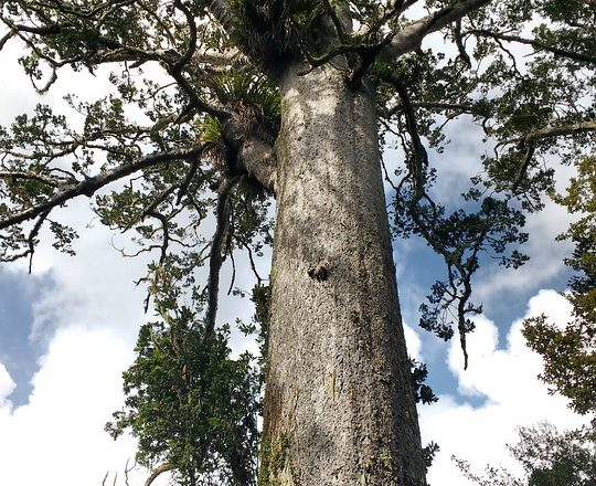 40,000-Year-Old Tree Shows What Happened During Earth's Last Magnetic Pole Reversal 5