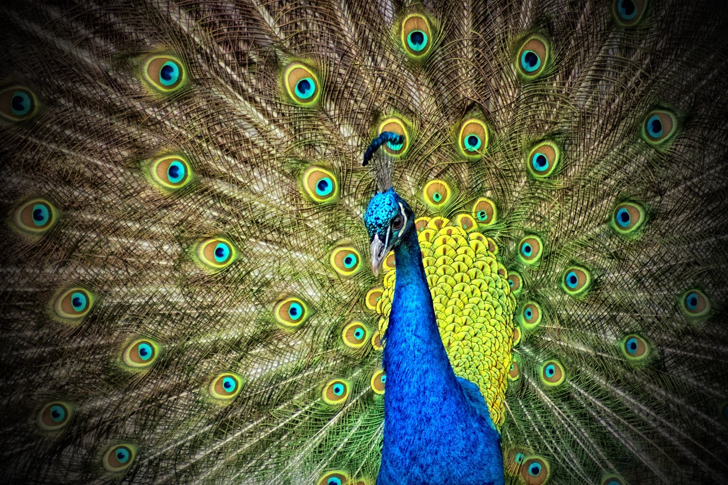 The Significance Of Peacock In Ancient Culture And Art 86