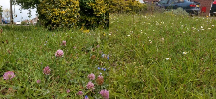 Four steps to make your lawn a wildlife haven – from green desert to miniature rainforest 16
