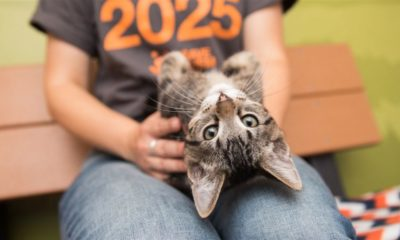 The First & Only No-Kill State For Shelter Animals In The US Has Been Declared 86