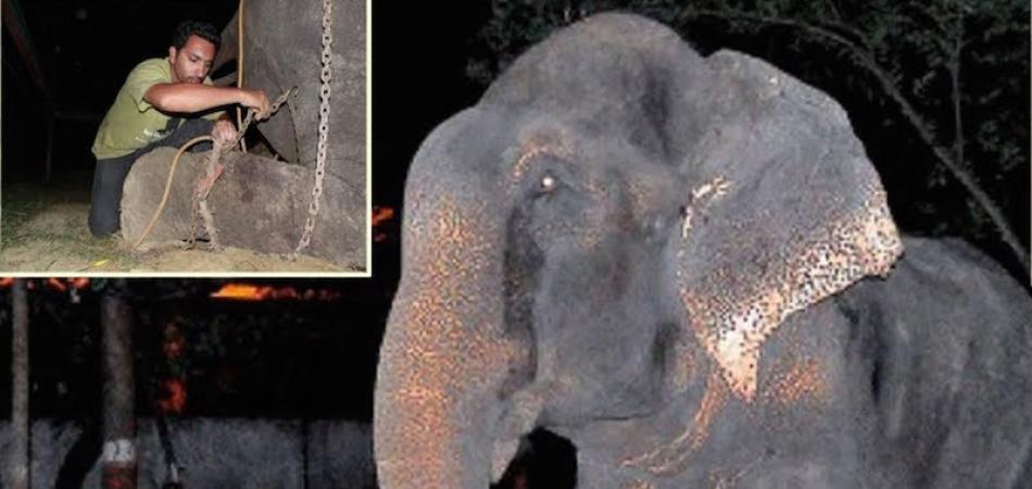 The elephant began to cry as he is rescued after 50 years of captivity 1