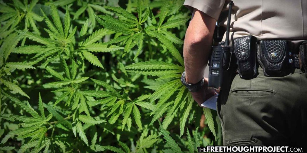Top Court Rules Cops Can No Longer Stop People After Claiming to Smell Marijuana 12
