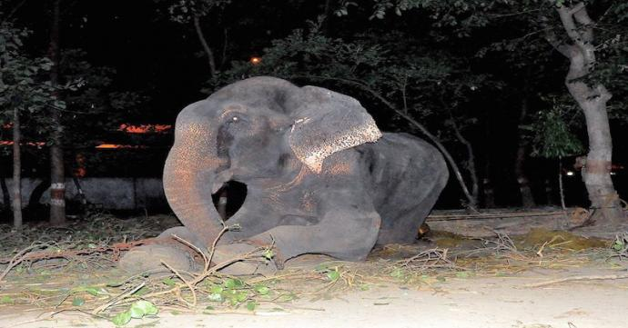 The elephant began to cry as he is rescued after 50 years of captivity 99