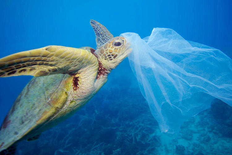 Ireland to Reduce Waste by Cutting out All Single-Use Plastic 1