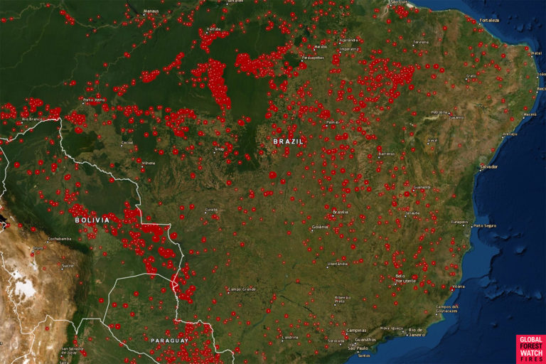 Satellite Images Reveal Devastating Amazon Fires in Almost Real-Time 110