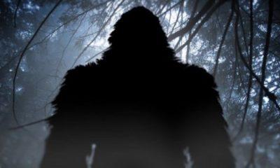 Mystery primate terrorizes Texas residents 106